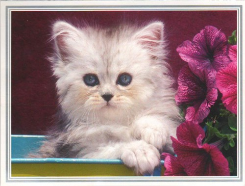 """Посткроссинг: почтовая открытка из Нидерландов """"Котенок"""""""