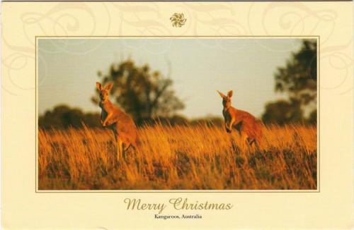 """Посткроссинг: открытка из Австралии """"Кенгуру"""""""