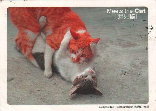 """Посткроссинг: почтовая открытка Тайваня """"Кошки"""""""