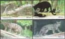 дикие кошки Малайзии