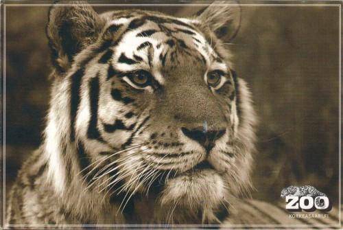открытка Финляндии тигр