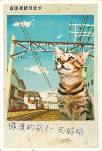 Открытка Тайваня - кот